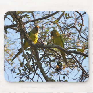 Peach-fronted Parakeet Mousepad