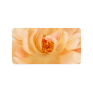 Peach Garden Rose Flower - Romantic Roses Template Personalized Address Labels