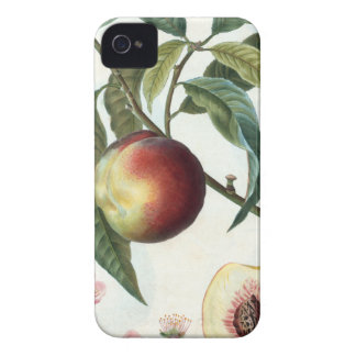 peach iPhone 4 Case-Mate case