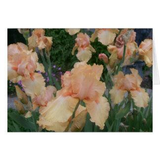 Peach Iris Card