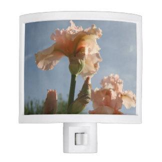 Peach Iris Night Light