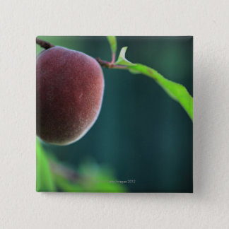Peach on a peach tree 2 inch square button