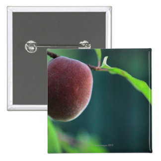 Peach on a peach tree 2 inch square button