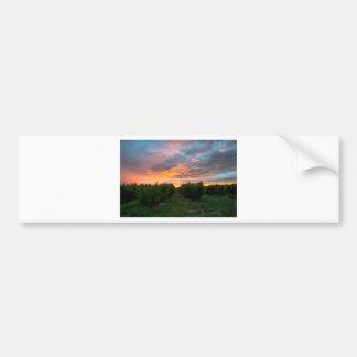 Peach Orchard Sunset Bumper Sticker