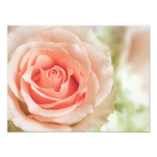 Peach Pink Rose Background Customized Photographic Print