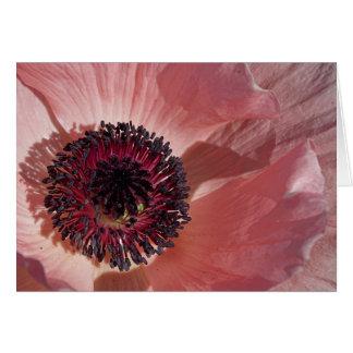 Peach Poppy Blank Notecard