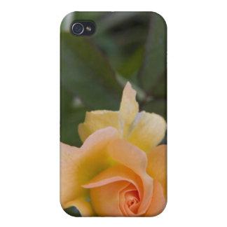 Peach Rose i iPhone 4/4S Case