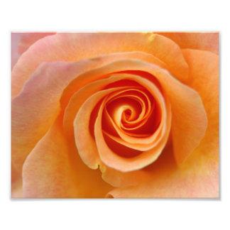 Peach Rose Photo Print