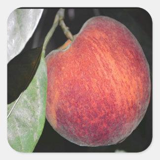 Peach Square Sticker