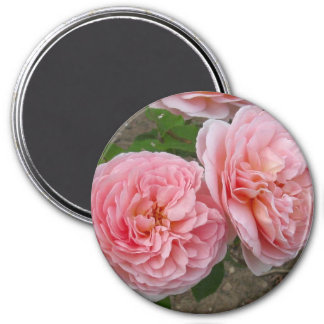 "Peachy Pink English Rose 3"" Round Magnet"
