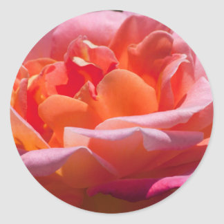 Peachy Rose Round Sticker