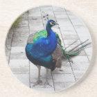 Peacock 1 coaster