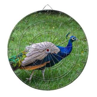 Peacock 2 dartboard