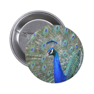 Peacock 2 Inch Round Button
