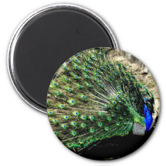 Peacock 2 Inch Round Magnet
