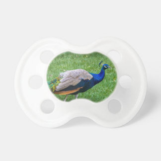 Peacock 2 pacifiers