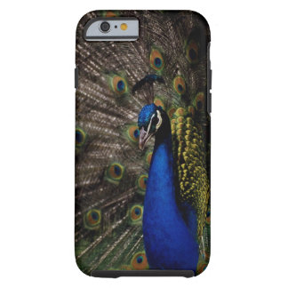 Peacock 2 tough iPhone 6 case