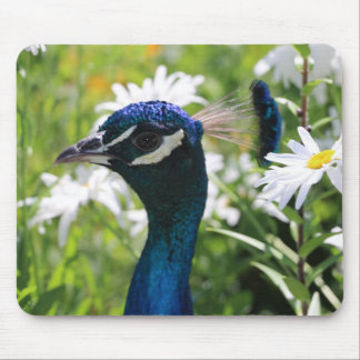 Peacock and Daisies Mouse Pad