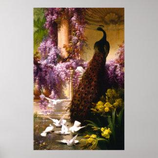 Peacock and doves Ina garden Poster