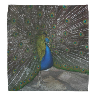 Peacock Bandannas