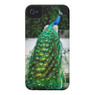 peacock beautiful feather art colours iPhone 4 cover