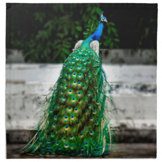 peacock beautiful feather art colours napkin