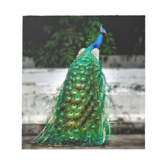 peacock beautiful feather art colours notepad