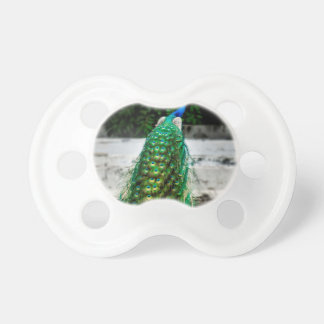 peacock beautiful feather art colours pacifier