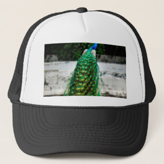 peacock beautiful feather art colours trucker hat