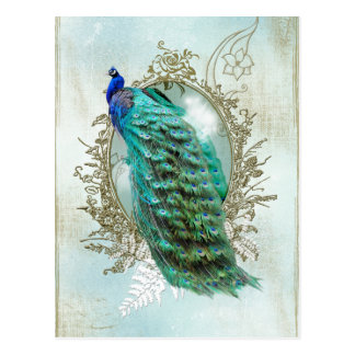peacock beautiful turquoise vintage shabby bird postcard