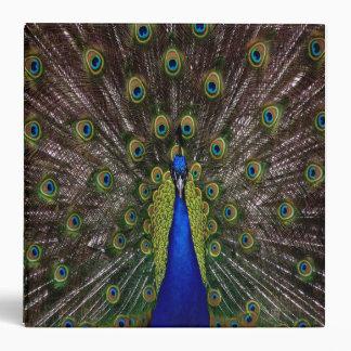 peacock binder notebook