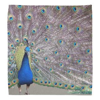 Peacock Bird Bandana