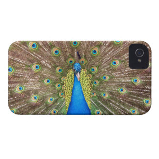 Peacock bird blue feather photo iphone 4 case mate