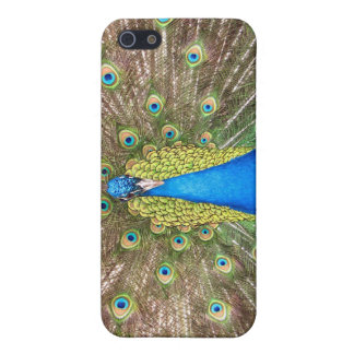 Peacock bird blue feathers photo iphone 4 case