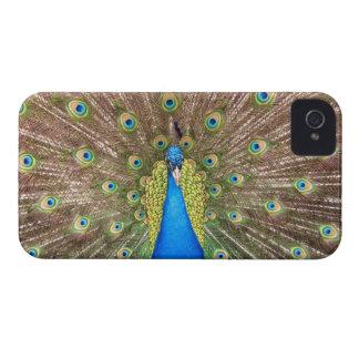 Peacock bird feathers beautiful iphone 4 case mate