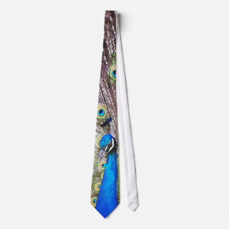 Peacock Bird & Feathers Tie