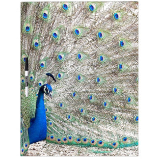 Peacock Bird Wildlife Animal Dry Erase Board