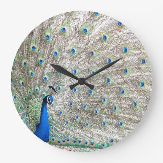 Peacock bird Wildlife Animal Feathers Clock