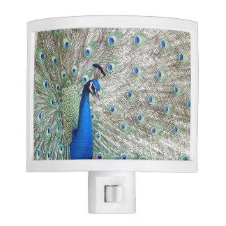 Peacock bird Wildlife Animal Feathers Nite Lites