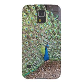 Peacock Bird Wildlife Animals Feathers Galaxy S5 Cases