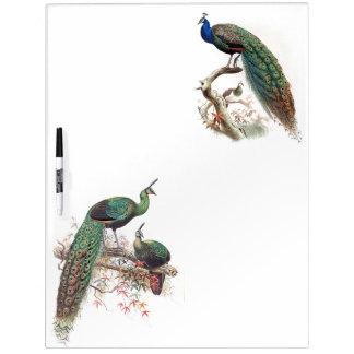Peacock Birds Wildlife Animals Dry Erase Board