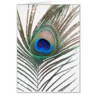Peacock Blank Card