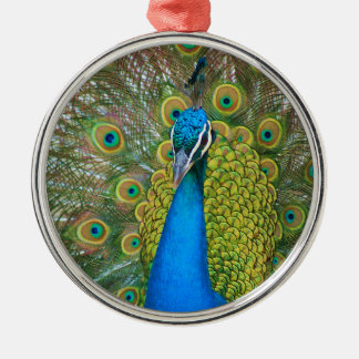 Peacock Blue Head with and Colorful Tail Feathers Silver-Colored Round Ornament