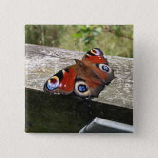 Peacock Butterfly 2 Inch Square Button