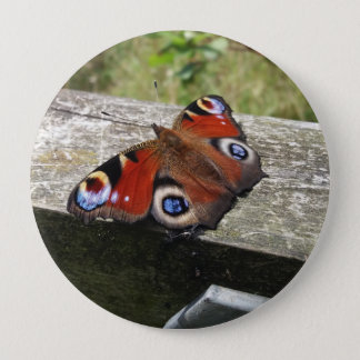 Peacock Butterfly 4 Inch Round Button