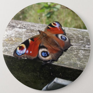 Peacock Butterfly 6 Inch Round Button
