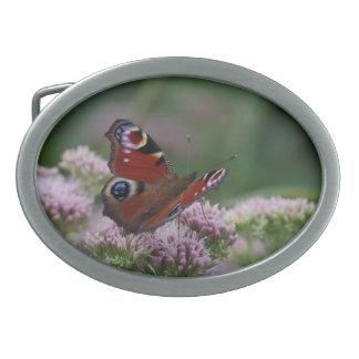 Peacock Butterfly Belt Buckle