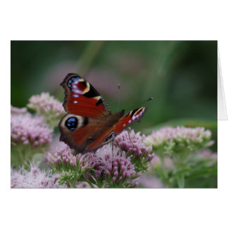 Peacock Butterfly Birthday Card
