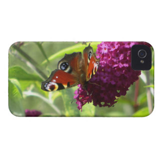 Peacock Butterfly Case-Mate iPhone 4 Cases