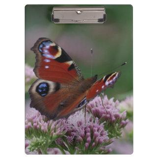 Peacock Butterfly Clipboard